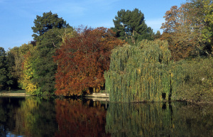 autumn-foliage-runnymede